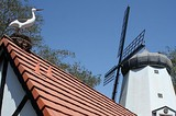 Stork on a rooftop and Danish windmill