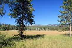 Meadow in Yellowstone National Park