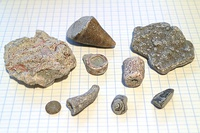Fossils from beaches of the Baltic Sea island of Gotland, placed on paper with 7 mm (0.28 inch) squares