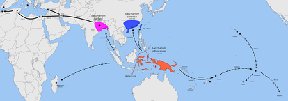 Map showing centers of origin of Saccharum officinarum in New Guinea, S. sinensis in southern China and Taiwan, and S. barberi in India; dotted arrows represent Austronesian introductions[10]