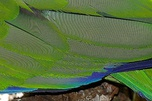 Strong moiré visible in this photo of a parrot's feathers (more pronounced in the full-size image)