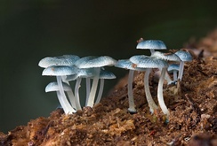 Fungi are one of the kingdoms of life on Earth.