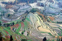 Honghe Hani Rice Terraces in Yunnan