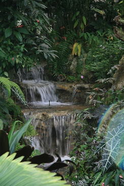 A waterfall in the Butterfly Rainforest