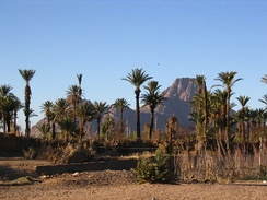 An oasis in the Ahaggar Mountains. Oases support some life forms in extremely arid deserts.