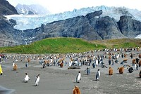 Penguins in South Georgia, 2010.
