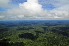 The Amazon rainforest, the most biodiverse rainforest in the world