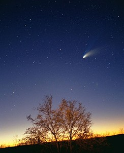 2 minute time exposure of the comet Hale-Bopp imaged using a camera on a fixed tripod. The tree in the foreground was illuminated using a small flashlight.