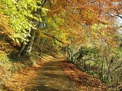 Осенняя тропинка в Англии