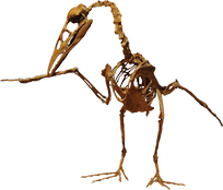 Ichthyornis, which lived 93 million years ago, was the first known prehistoric bird relative preserved with teeth.