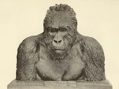 """The Old Man of Mikeno"", bronze Bust of a mountain gorilla by Carl Akeley"