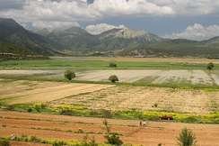 Agiorgitiko is widely planted in the Peloponnese (vineyard and planted fields pictured) region of Greece.
