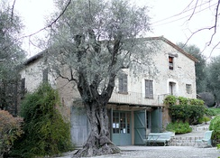 Photograph of a stone house with three floors fronted by an old olive tree