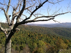 Due to its elevation, the Blue Ridge Mountains have a humid continental climate.