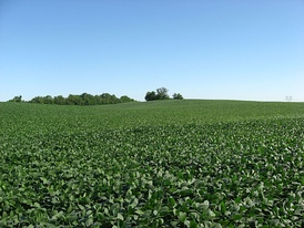 Soybean fields at Applethorpe Farm, north of Hallsville in Ross County, Ohio