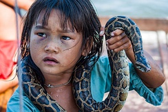 A little girl making money for her family by posing with a snake in a water village of Tonle Sap Lake