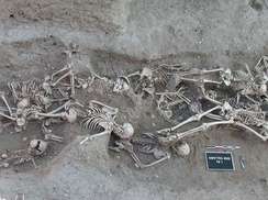 Skeletons in a mass grave from 1720–1721 in Martigues, France, yielded molecular evidence of the orientalis strain of Yersinia pestis, the organism responsible for bubonic plague. The second pandemic of bubonic plague was active in Europe from 1347, the beginning of the Black Death, until 1750.