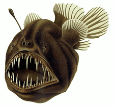 The humpback anglerfish angles for small fish by deceptively dangling a bioluminescent lure in front of its jaws.
