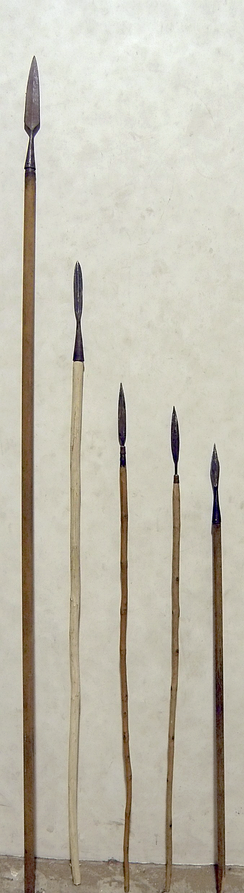 Modern reproductions of a medieval European spear and a series of javelins. The heads are hand forged steel, the shafts are made from ash wood.