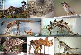 Various dinosaurs 4.jpg