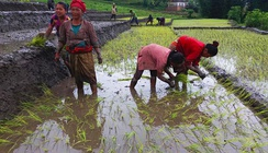 Two-thirds of the Nepali workforce is employed in agriculture but productivity is low, as most of it is done with traditional methods and manual labour.