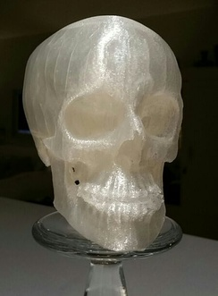 Reduced size 3D printed human skull from computed tomography data.