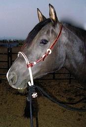 Лошадь в бестрензельном оголовье bosal