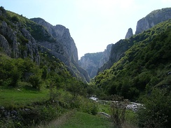 More than 1,000 plant species can be found in the Cheile Turzii reserve