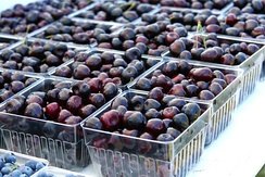 Michigan is the leading U.S. producer of tart cherries, blueberries, pickling cucumbers, navy beans and petunias.
