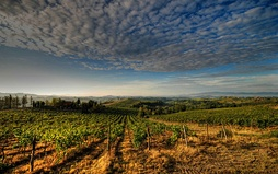 Vineyards in the Chianti region