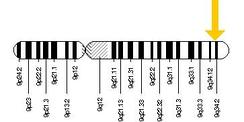 Ген кодирующий белки группы крови системы AB0 располагается на длинном (q) плече хромосомы 9 в положении 34.2. Точнее, расположен от пары оснований ДНК 133 255 175 к паре оснований 133 275 213