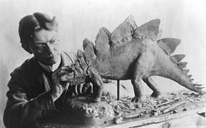 Чарльз Найт делает реконструкцию стегозавра