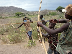 The Hadza live as hunter-gatherers