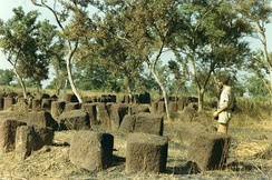 Megalithic alignments in Senegal.
