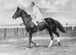 Patton on his steeplechase horse, Wooltex, in 1914