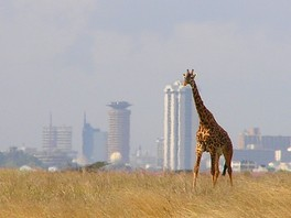 A giraffe at Nairobi National Park, with Nairobi's skyline in background