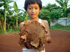 A boy from Jakarta with his ball. Ball games are good exercise, and are popular worldwide.