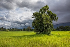 Paddy fields in Laos