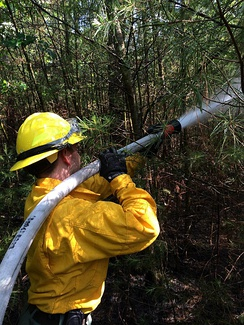Wildland firefighter working a brush fire in Hopkinton, NH