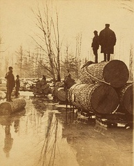 Lumbering pines in the late 1800s