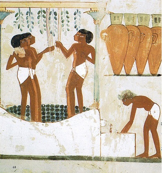 Grapes being trodden to extract the juice and made into wine in storage jars. Tomb of Nakht, 18th dynasty, Thebes, Ancient Egypt