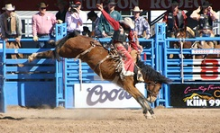 A rodeo cowboy in saddle bronc competition