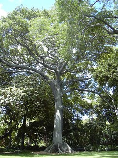 Sài Gòn may refer to the kapok (bông gòn) trees that are common around the city.
