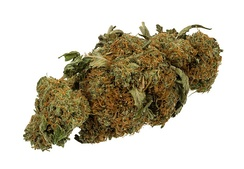 A dried bud, typical of what is sold for drug use