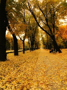 Carol Park's central alley in autumn