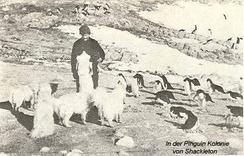 Самоеды в антарктической экспедиции