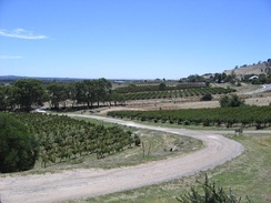 An overview of the Bethany vineyard, first planted in 1852. Bethany was the first settlement in the Barossa region.