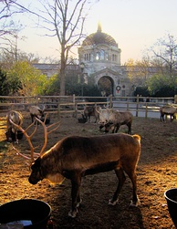 Reindeer at the Bronx Zoo, the world's largest metropolitan zoo.[191]