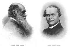Original plates of Darwin and Mendel from Volume 1, Issue 1 of the American Breeders Magazine, 1910.