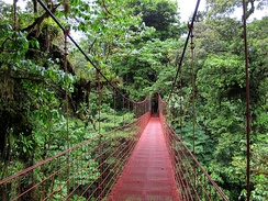 Canopy walkway for seeing the diverse tropical forest in Costa Rica
